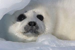 Seal  6-10