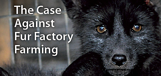 Ask Your MEP to Make A Difference In the Battle Against The Fur Trade