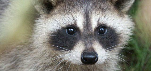 #FFUK – calling for a Fur-Free UK