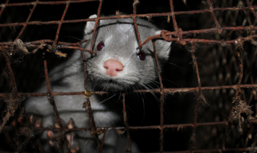 Mink farms in Ireland will be shut down 'by the end of the year'