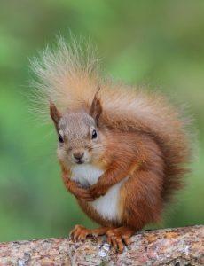 Squirrel 200-400