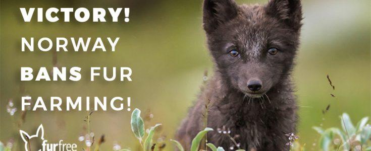 Norway set to ban fur farming