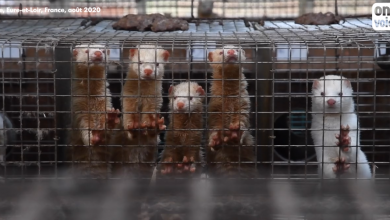 Animal Ethics: fur is cruel