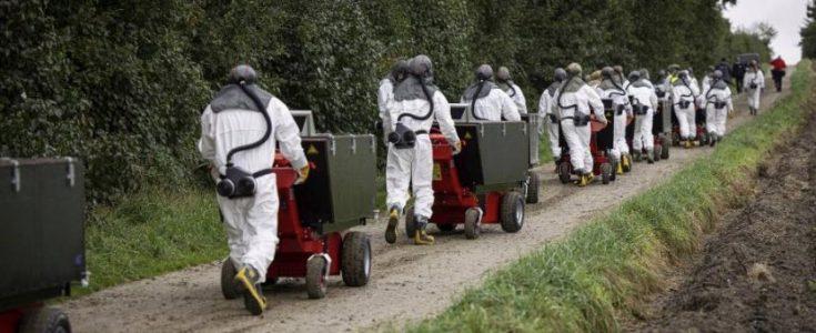Slaughter on Denmark's Covid-hit fur farms